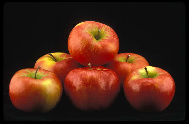 Honeycrisp Apples 6